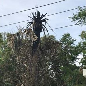 picture of a palm tree touching wires